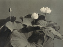 Teiko Shiotani — Pioneer of Artistic Photography in Japan