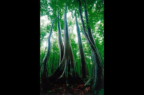 日本自然科学写真協会 第35回SSP...